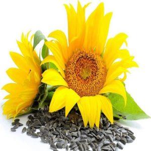 Buy Sunflower Seed Online